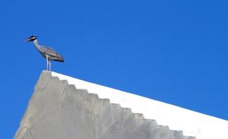 Heron