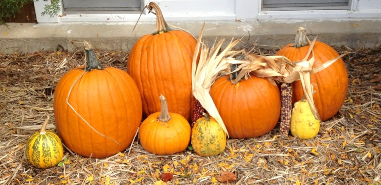 """Those pumpkins look like a family to me.  See?  There me and Daddy and you and Farrah.  And Nida and Nola!"""