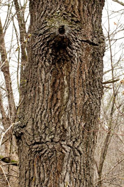 Treeclops