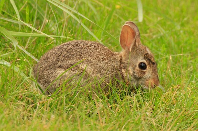 Bunny 028
