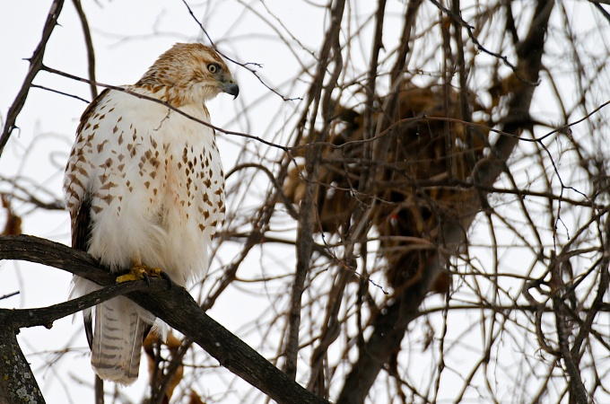 Birding Begins: The Hawk of Own Park