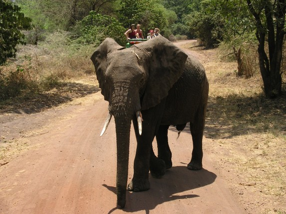 That's me in the red tank top. Behind the elephant.